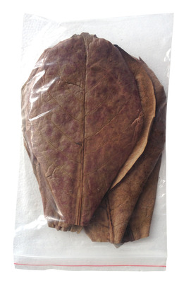 Indian Almond Leaves Large 10 Pkt