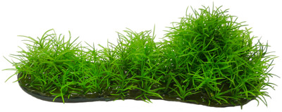 Aqua Dekore Micro Sword Aquarium Plant Medium