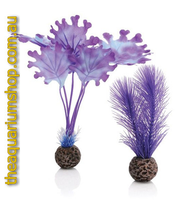 biOrb Purple Kelp Plant Set Small