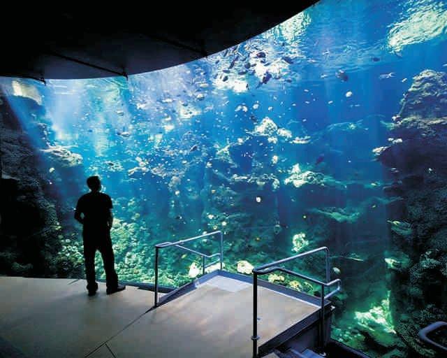 Aquarium Air Stones & Valves - The Aquarium Shop Australia