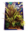 Amazon Jungle Amazon Spike Grass Display 20cm