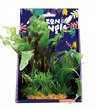 Amazon Jungle Mixed Aponogeton Display 20cm