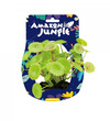 Amazon Jungle Pennywort Display 10-12cm