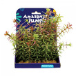 Amazon Jungle Red Anacharis Display 15cm