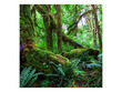 Amazon Rainforest Poster Background  for Aquarium Terrarium Vivarium
