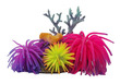 Anemone Gardens Ornament No 2