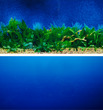 Aquarium Background Double Sided 30.5cm high - Blue and Plants