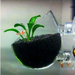 Aquatic Plant Glass Polka Pot  With Suction Cup Tank Attachment