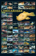 Azoo High Gloss Poster Loricariidae (L Number)