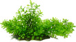 Aqua Dekore Hygro Branch Log Aquarium Plant Large