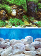 Seaview Aquarium Background Double Sided 29.5cm high - Aquatic Garden-Bright Stones