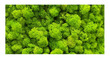 Moss Wall Poster Background  for Aquarium Terrarium Vivarium