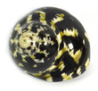 Polished Sea Shell Turbo Pica Black/White Medium