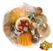 Sea Shells and Shell Gifts
