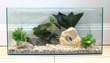 Standard Glass Aquarium <br>24 x 12 x 12inches high