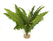 Sydeco Giant Fern 40cm