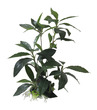 Tall Shade Leaf Plant 28cm